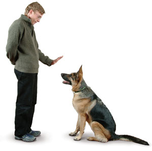 dog-training-commands.jpg
